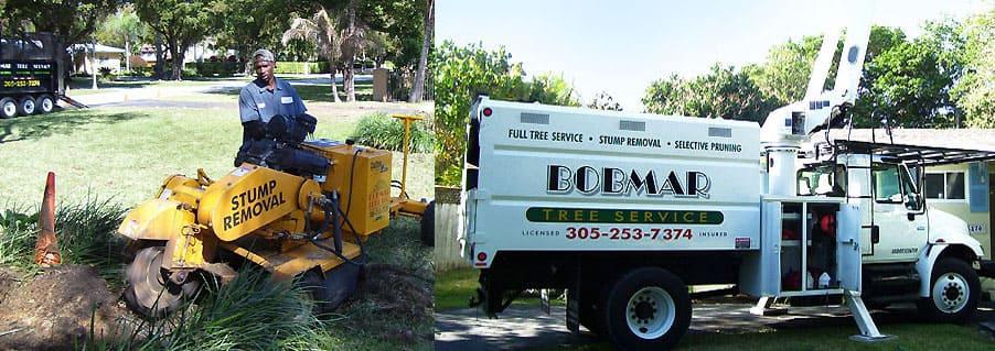 Experienced Tree Trimming Miami Locals Trust Call Bob