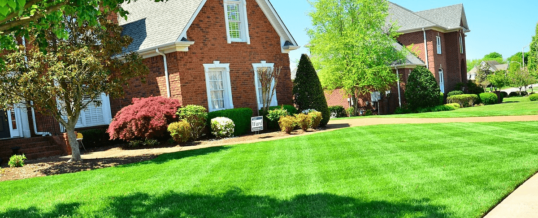 What Our Lawn Service Can Do for You This Summer