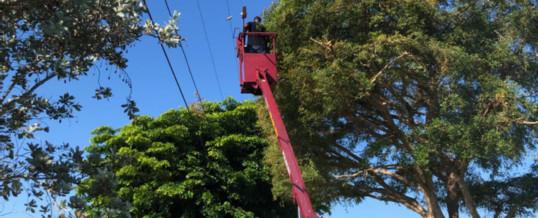 Tree Pruning Guidelines